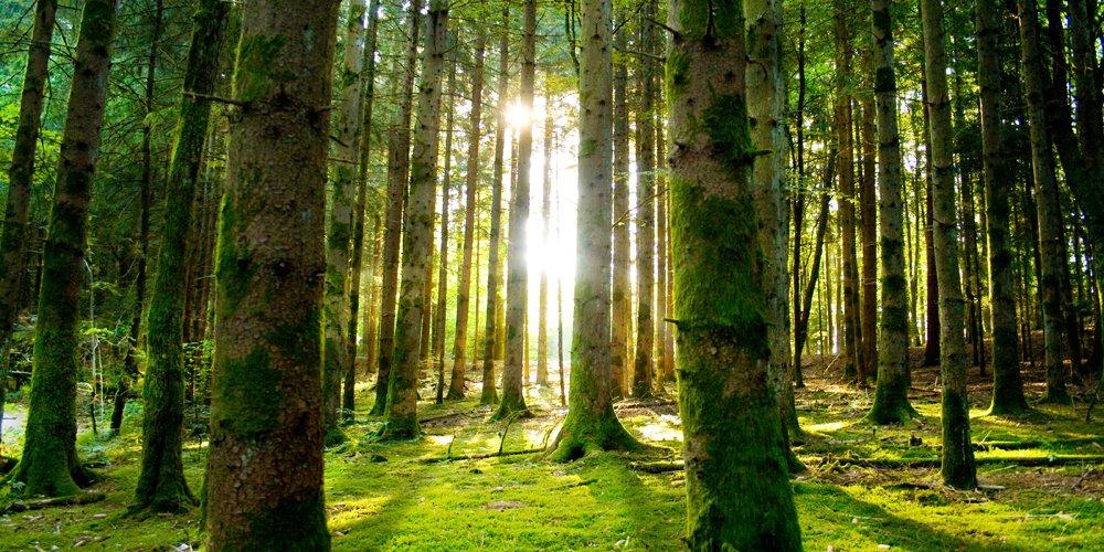 Järkevä energiasiirtymä huomioi metsien monimuotoisuuden